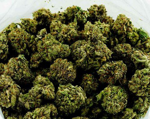 weed-canada-20