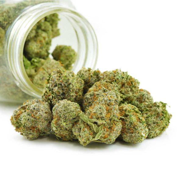 Buy Cannabis Alaskan Thunder Fuck (ATF) AAAA at MMJ Express Online Shop