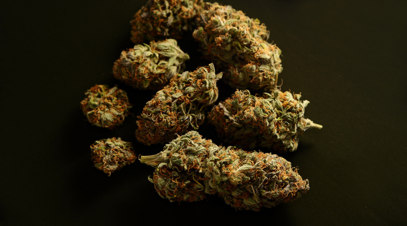 The Science of Sativa Cannabis Strains