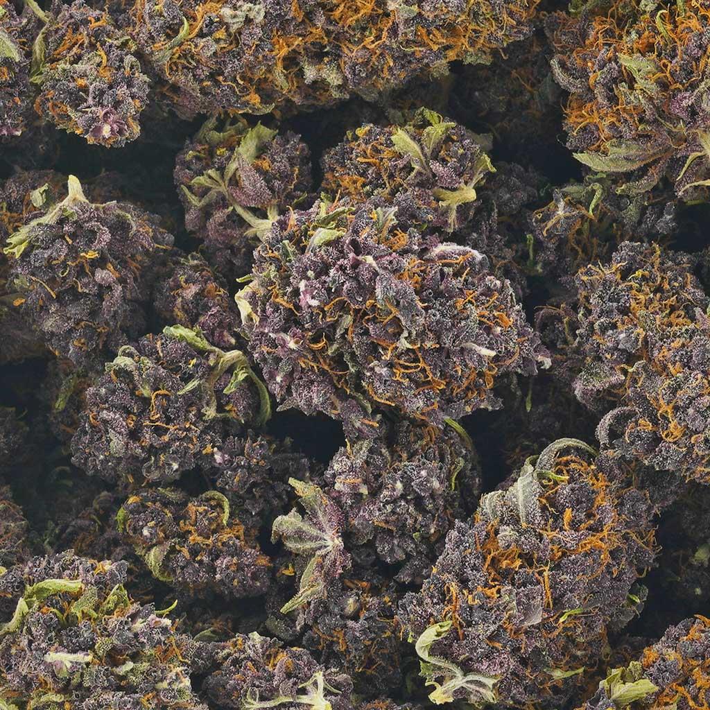Buy Cannabis Huckleberry Soda AAAA at MMJ Express Online Shop