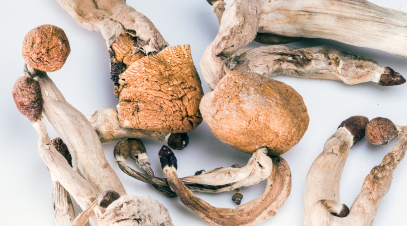 Heres How to Make Delicious Magic Mushroom Tea