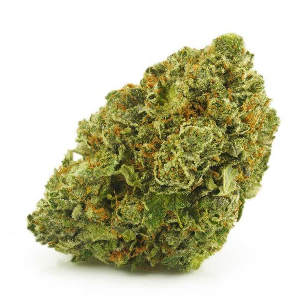 Buy Cannabis Tropic Truffle AAAA at MMJ Express Online Shop