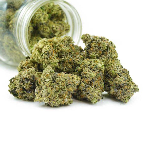 Buy Cannabis Platinum Bubba X Grape Stomper AAAA at MMJ Express Online Shop
