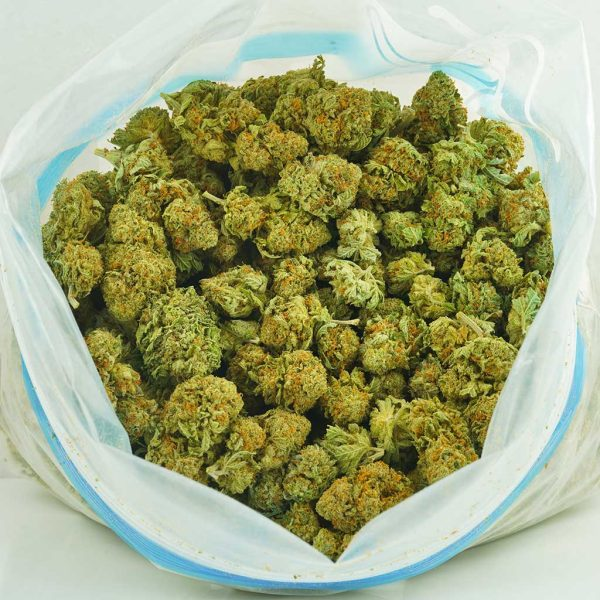 Buy Cannabis Pablo's Cheese AA at MMJ Express Online Shop