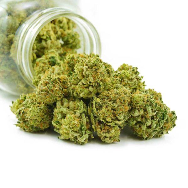 Buy Cannabis Violator Kush AAAA at MMJ Express Online Shop