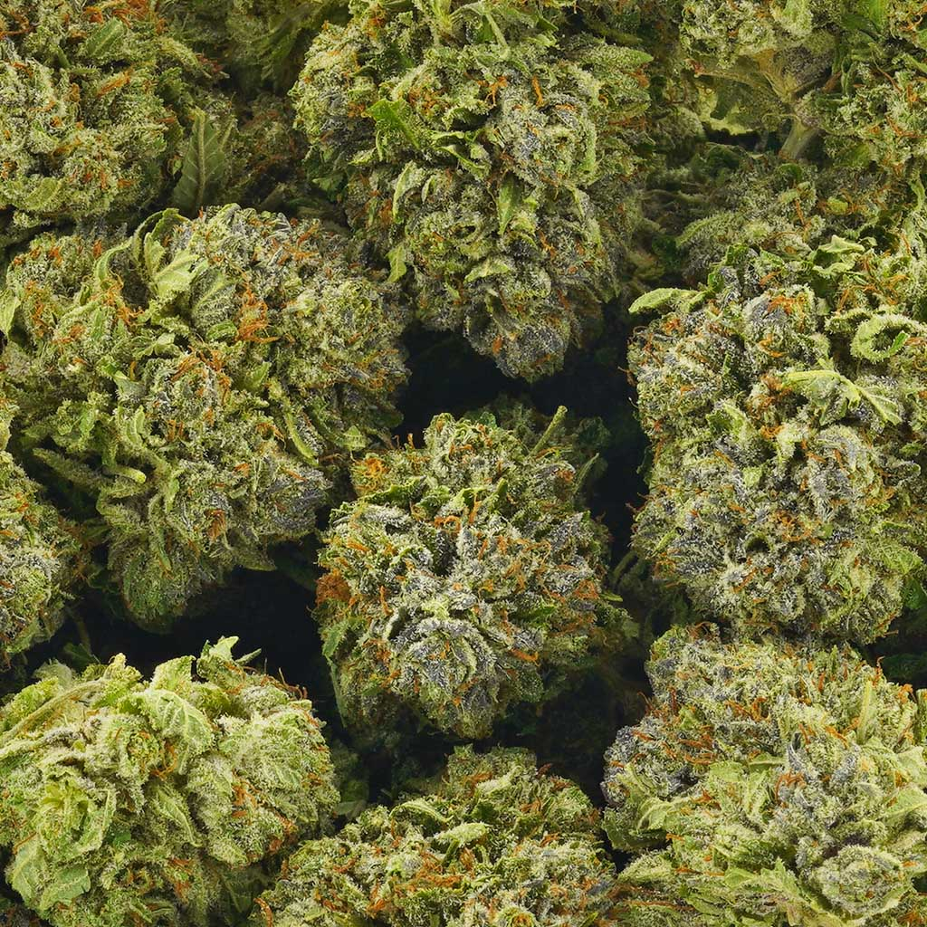 Buy Cannabis Key Lime Pie AAAA at MMJ Express Online Shop