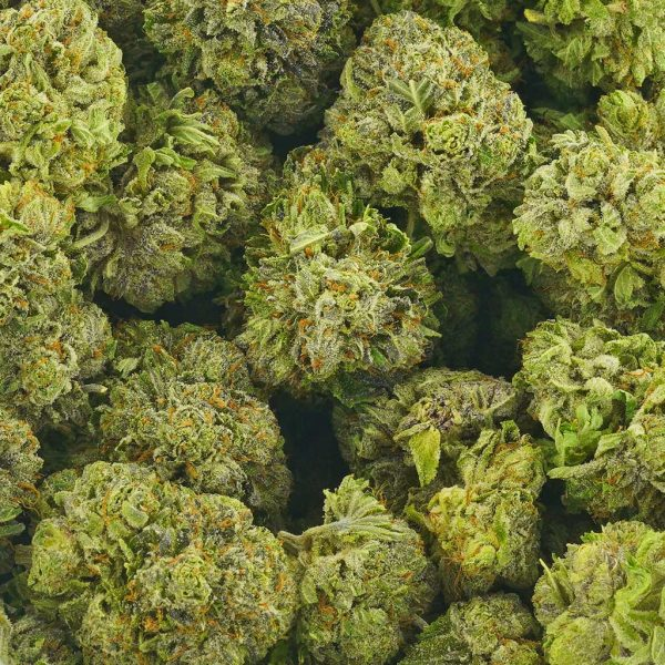 Buy Cannabis Harlem AAAA at MMJ Express Online Shop