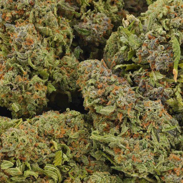 Buy Cannabis Fruity Widow AAAA at MMJ Express Online Shop